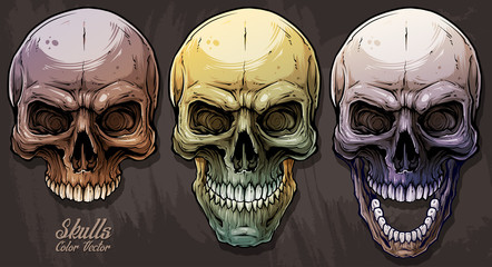Detailed graphic realistic cool colorful human skulls. On gray grunge background. Vector icon set. Wall mural