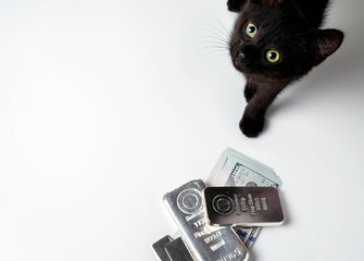 A rich cat. Cat near the silver bullion and cash dollars. Selective focus.
