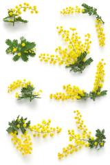 mimosa assortments for Festa della Donna