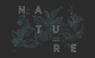 Vector nature template. Botanical art sketch design. Coffee green tree