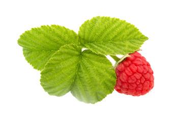 Fresh ripe raspberries.