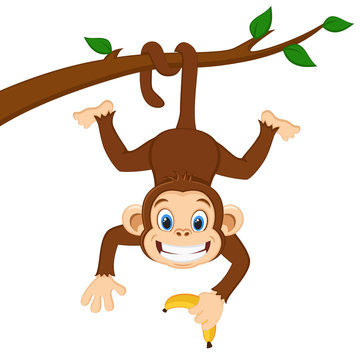 Monkey is hanging on a branch and holding a banana on a white.