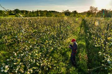 Using a digital tablet, an apple grower checks his apple trees