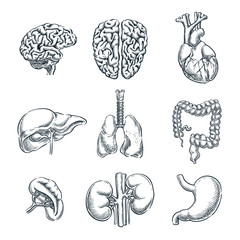 Human internal organs. Vector sketch isolated illustration. Hand drawn doodle anatomy symbols set