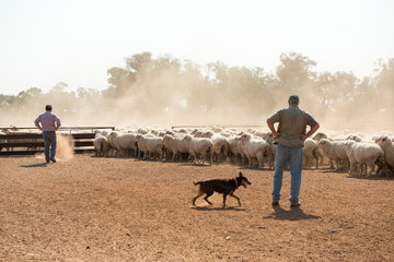 film stills at Weilmoringle NSW sheep muster at shearing shed