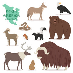 Animal vector animalistic character in forest bear deer elk in America wildlife illustration set of American predator mountain goat isolated on white background