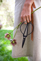 florist holding clippers and hellebores