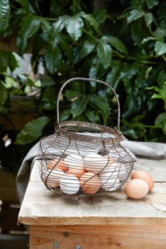 Farm Eggs in wire basket with Dogwoods