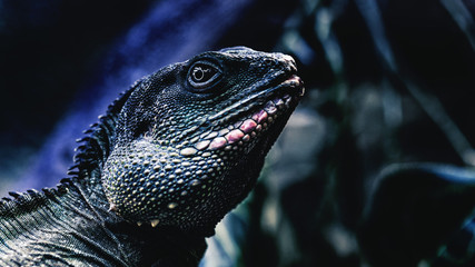 Lizard on green background