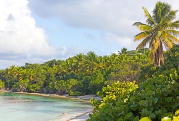 Wall Mural - A small sandy beach with tropical plants on St Thomas island, USVI.