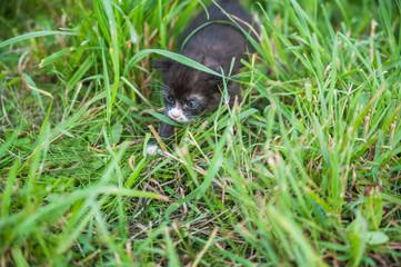 black kitten outdoors in the grass