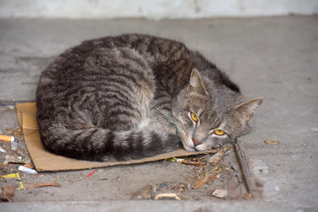 gray homeless unhappy cat sleeping