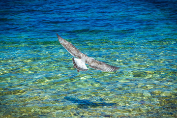 Seagull takes off over the water, top view, background with vignette, selective focus