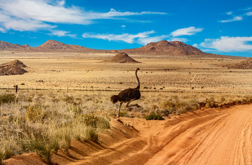 namibia road ostriche