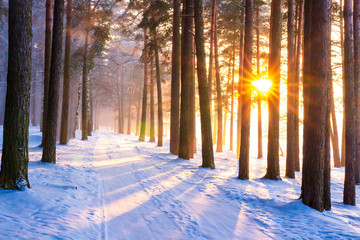 Winter forest with sun