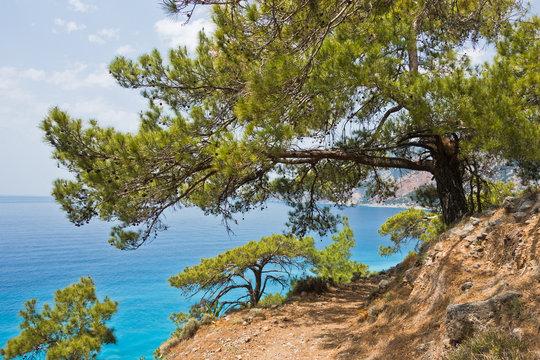 Pine trees on e4 trail along coastline between Loutro and Agia Roumeli at south-west od Crete island, Greece