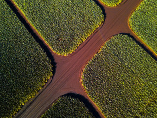 Aerial top down view of the pinapple plantation on Hawaii
