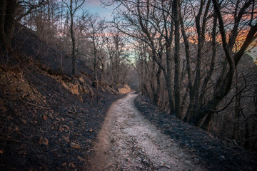 burned forest with black ashes and a trail in the middle
