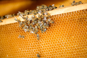 close up of bees on honeycomb in apiary
