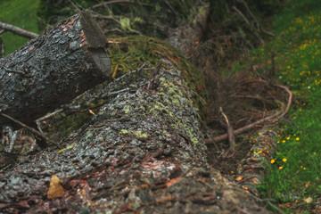 Alpine natural Treestem