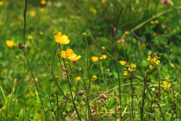 alpine Flower Meadow