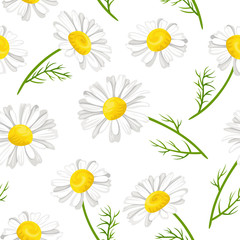 Floral seamless pattern with chamomile flowers, stems and green leaves on white background. Vector illustration in cartoon simple flat style.