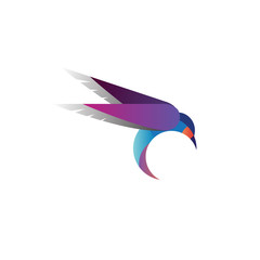 humming bird logo design