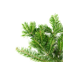 Top view flat lay natural Christmas tree branches corner frame on bright background. New year decor concept. Text space
