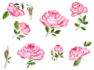 Watercolor hand drawn roses buds and flowers elements variety. Isolated floral illustration on white background.