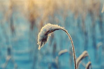 Winter  Beautiful Christmas landscape