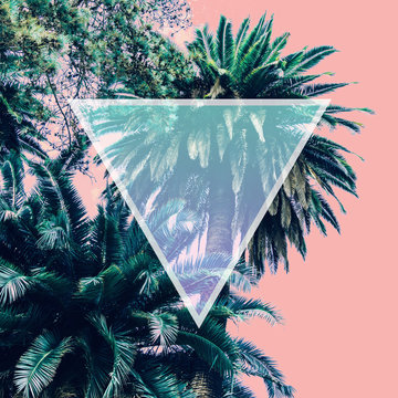 Aesthetic awesome view of nature with palm trees in the inversion colours and triangle frame.  .