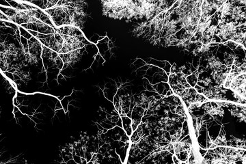 white tree branches on a black background