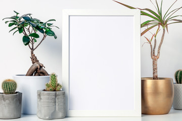 White shelf in the house with plants in pots and white frame mockup. Cacti, bonsai and yuka in a golden casing. Hipster decoration. A place for your text or graphics