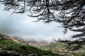 Cedar forest in Bsharri, Lebanon.