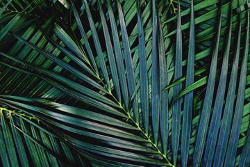 Dark green palm leaf texture background, tropical jungle tone concept