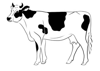 cow line illustration