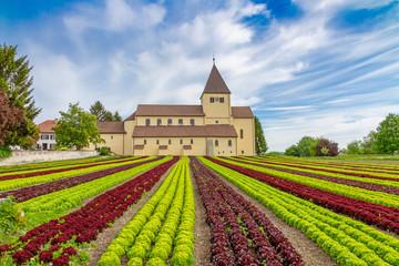 Landwirtschaft am Bodensee - Salatanbau auf der Insel Reichenau, Georgskirche