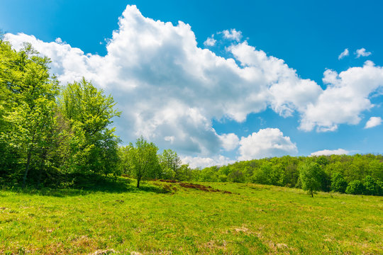 grassy meadow among beech forest. beautiful springtime scenery at high noon. huge fluffy cloud above.