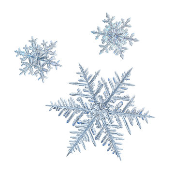Extreme magnification: three snowflakes isolated on white background. Macro photo of real snow crystals: elegant stellar dendrites with ornate shapes, hexagonal symmetry and complex inner details.