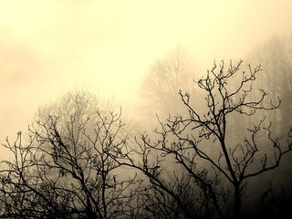 Sepia of a Group of Trees with Leafless Branches and Fog in the Rural Village of Loco in the...