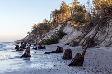 Pozostałości pradawnego lasu odsłoniętego przez morze spod wydm w Słowińskim Parku Narodowym.