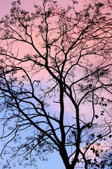 Silhouette of the tree with sunset sky on the background.
