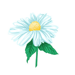 Daisy or Chamomile Tea Herb Flower and Green Leaves. Herbal Therapy. Botany Plant, Matricaria Loose Herbs. Isolated Vector Illustration of Camomile. Floral Blossom for Agriculture Packaging Design.