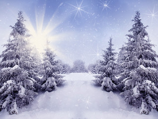 Beautiful winter landscape for the background, pine covered with snow, Christmas cards, Carpathian Mountains