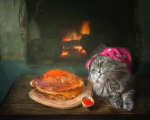 Pancakes Weeks with pretty gray kitty