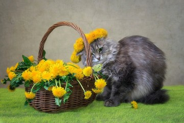 Spring floral still life  with pretty gray kitty
