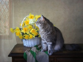 Still life with spring flowers  with pretty gray kitty