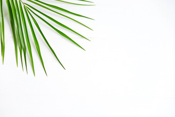 Frame for banner with palm leaf on white background. Tropical banner. Palm leaf on white wooden background. The basis for the banner