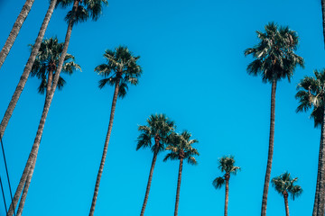 Wall Mural - Beautiful Los Angeles palms during hot summer day. Summer spirit and vibes in California.