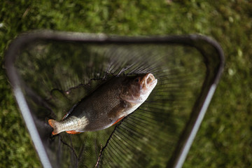 Fish caught on a fishnet